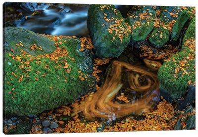 Torc Creek In Killarney National Park, Ireland Canvas Art Print