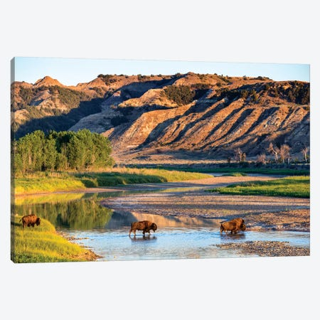 Group Of Roaming Bison (American Buffalo), Little Missouri River, Theodore Roosevelt National Park, North Dakota, USA 3-Piece Canvas #UCK19} by Chuck Haney Canvas Print