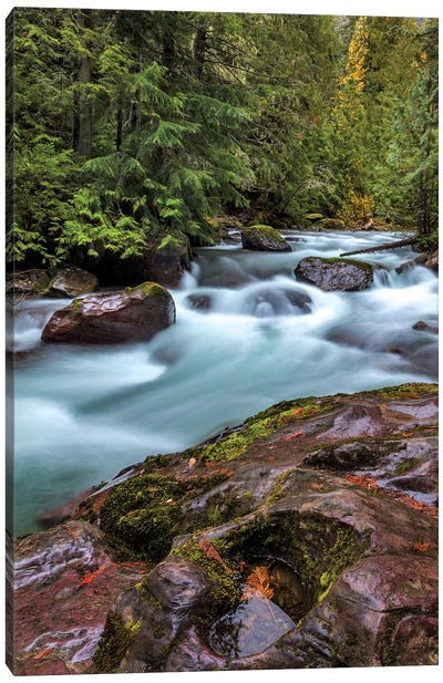 Avalanche Creek in Glacier National Park, Montana, USA Canvas Art Print
