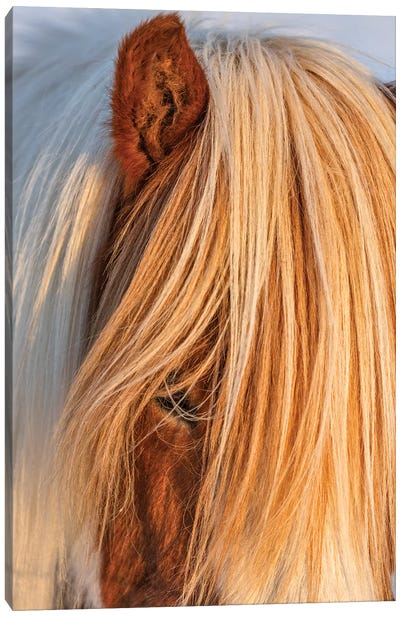 Icelandic horses in south Iceland I Canvas Art Print
