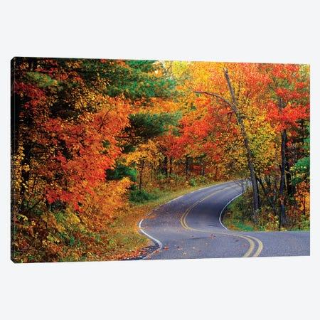 Autumn Landscape, Park Drive, Itasca State Park, Minnesota, USA Canvas Print #UCK3} by Chuck Haney Canvas Art
