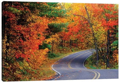 Autumn Landscape, Park Drive, Itasca State Park, Minnesota, USA Canvas Art Print