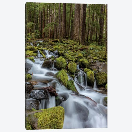 Small lush creek, Sol Duc Valley, Olympic National Park, Washington State, USA Canvas Print #UCK49} by Chuck Haney Canvas Art