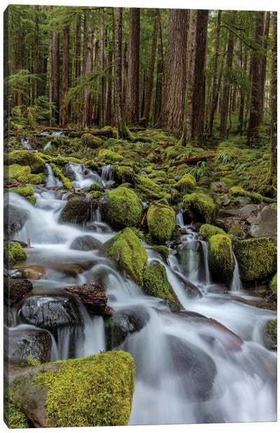 Small lush creek, Sol Duc Valley, Olympic National Park, Washington State, USA Canvas Art Print