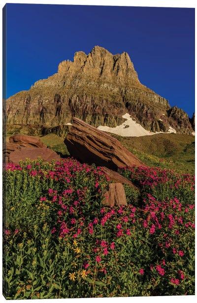 Wildflowers with Mount Reynolds, Logan Pass, Glacier National Park, Montana, USA I Canvas Art Print