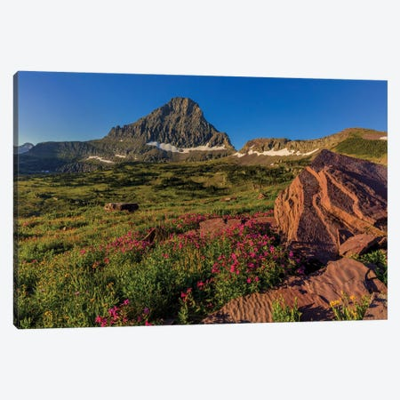 Wildflowers with Mount Reynolds, Logan Pass, Glacier National Park, Montana, USA II Canvas Print #UCK56} by Chuck Haney Canvas Artwork