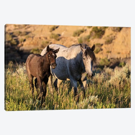 Wild horses in Theodore Roosevelt National Park, North Dakota, USA Canvas Print #UCK97} by Chuck Haney Canvas Wall Art