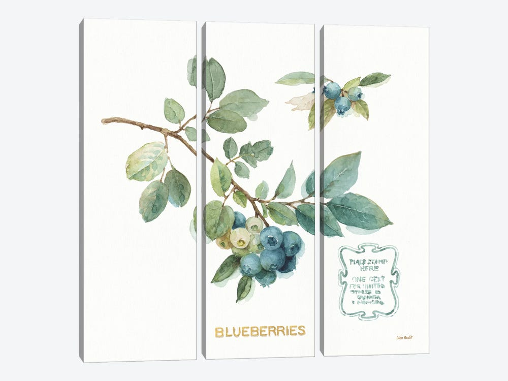 My Greenhouse Fruit II by Lisa Audit 3-piece Canvas Print