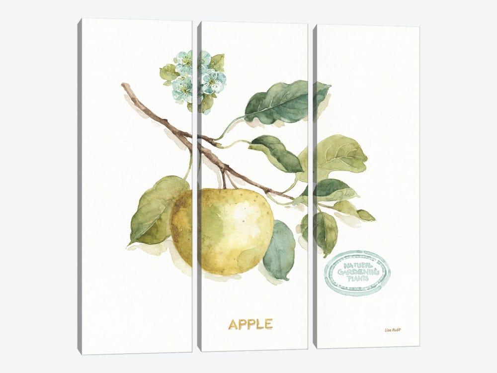 My Greenhouse Fruit IV by Lisa Audit 3-piece Art Print