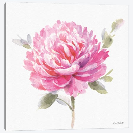 Obviously Pink IIIA Canvas Print #UDI247} by Lisa Audit Canvas Artwork