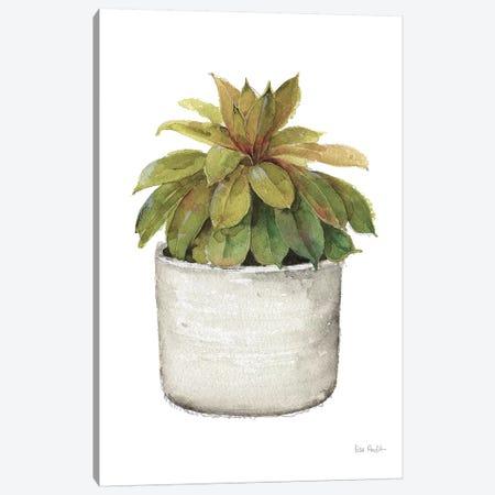 Mixed Greens Succulent III Canvas Print #UDI34} by Lisa Audit Canvas Print