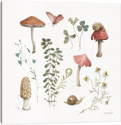 Forest Treasures II Canvas Art Print