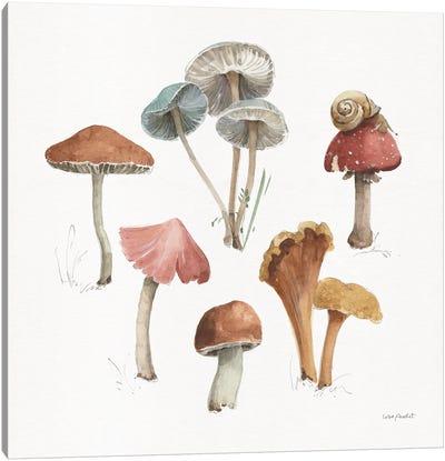 Mushroom Medley II Canvas Art Print