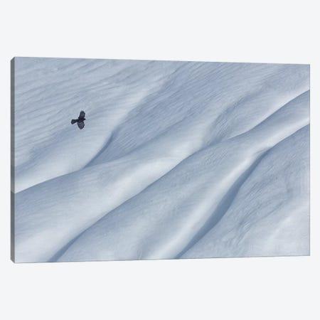 Mountain Jackdaw Canvas Print #UHE1} by Uschi Hermann Canvas Print