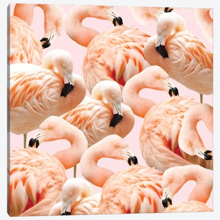 Flamingo Blush Canvas Print #UMA1089} by 83 Oranges Canvas Art Print