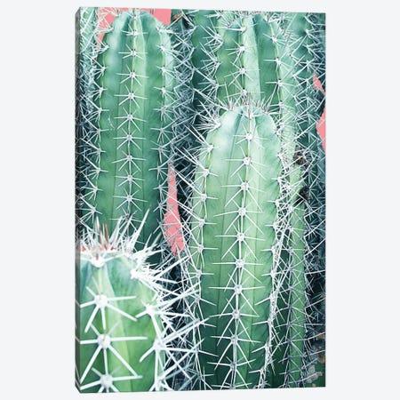 Cactus Up Close Canvas Print #UMA1121} by 83 Oranges Canvas Wall Art