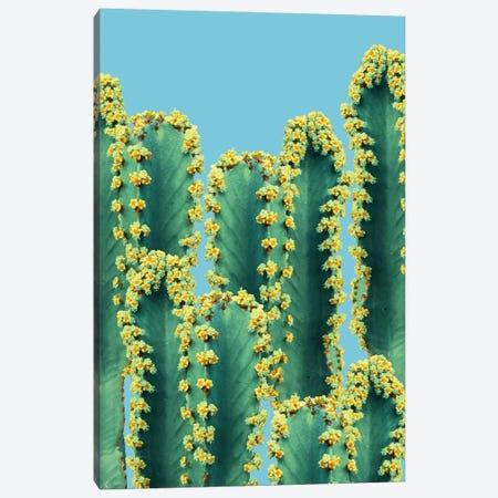 Adorned Cactus II Canvas Print #UMA1173} by 83 Oranges Canvas Print