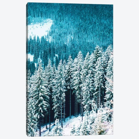 Rainforest Canvas Print #UMA1182} by 83 Oranges Canvas Artwork