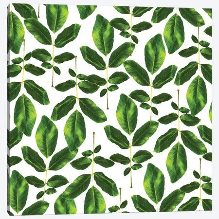 Natural Cure Canvas Print #UMA1184} by 83 Oranges Canvas Print