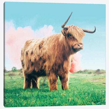 Highland Cow Canvas Print #UMA138} by 83 Oranges Art Print