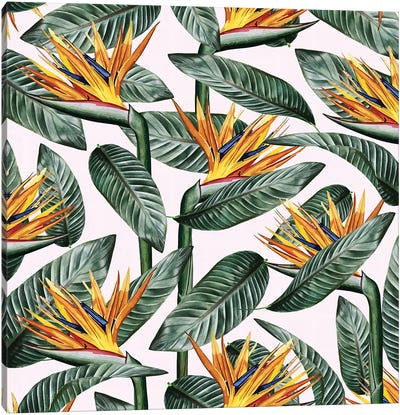 Bird Of Paradise Leaf Canvas Art Print