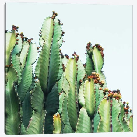 Cactus Love Canvas Print #UMA19} by 83 Oranges Canvas Art