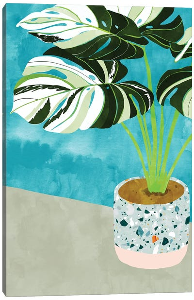 Variegated Monstera Canvas Art Print