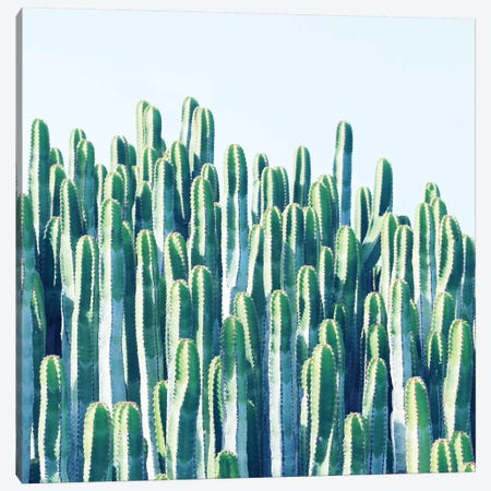 Cactus Plants Canvas Print #UMA21} by 83 Oranges Canvas Art Print