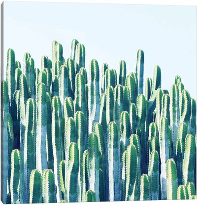 Cactus Plants Canvas Art Print