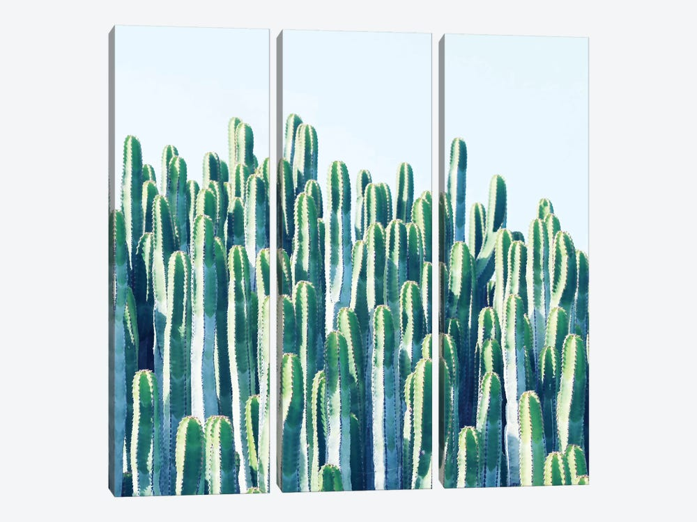 Cactus Plants by 83 Oranges 3-piece Canvas Wall Art