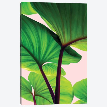 Charming Sequence Canvas Print #UMA23} by 83 Oranges Canvas Print