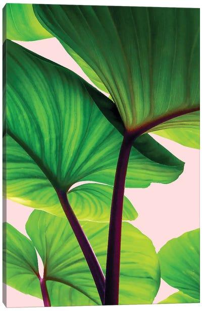 Charming Sequence Canvas Art Print