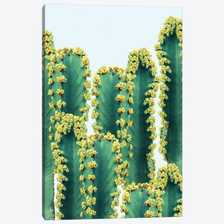 Adorned Cactus Canvas Print #UMA2} by 83 Oranges Canvas Art