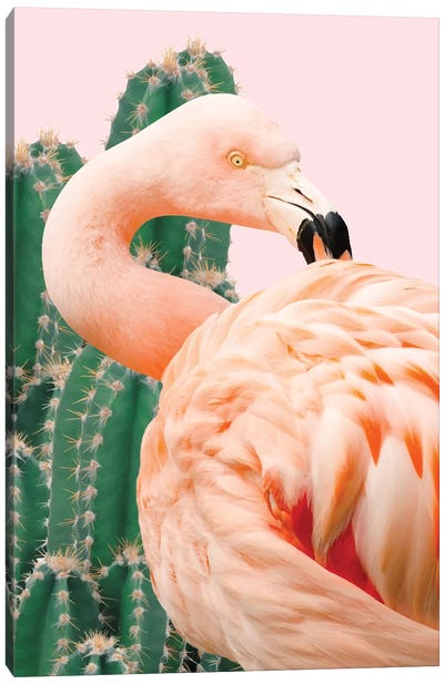 Flamingo And Cactus Canvas Art Print