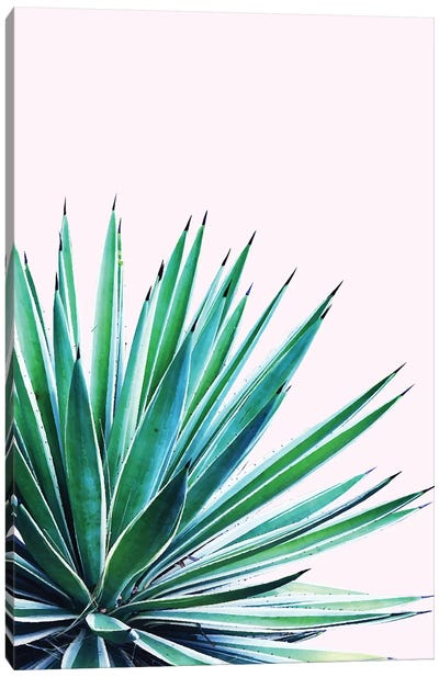 Agave Love Canvas Art Print