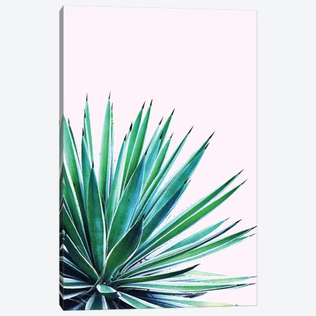 Agave Love Canvas Print #UMA4} by 83 Oranges Canvas Art Print
