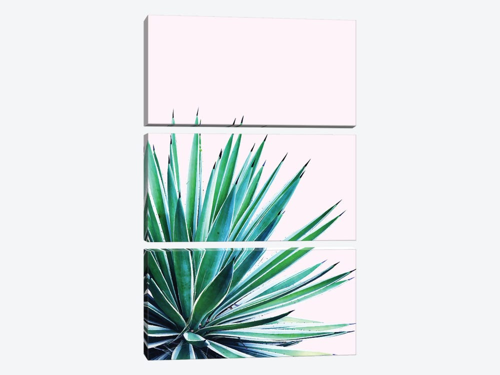 Agave Love by 83 Oranges 3-piece Canvas Print
