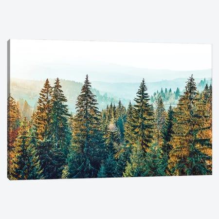 Pine Beauty Canvas Print #UMA512} by 83 Oranges Canvas Art Print