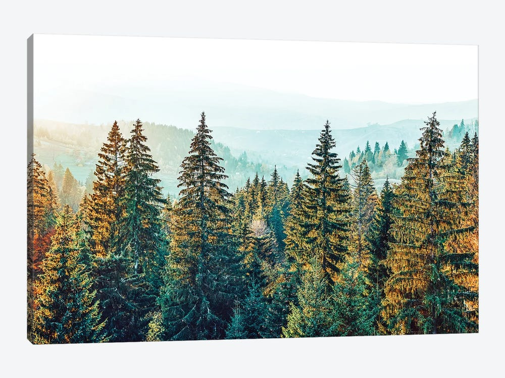 Pine Beauty by 83 Oranges 1-piece Canvas Print