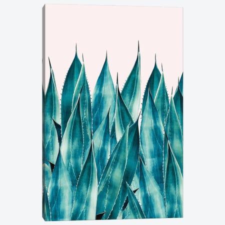 Summer Agave Canvas Print #UMA532} by 83 Oranges Canvas Print