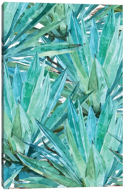 Agave Canvas Art Print