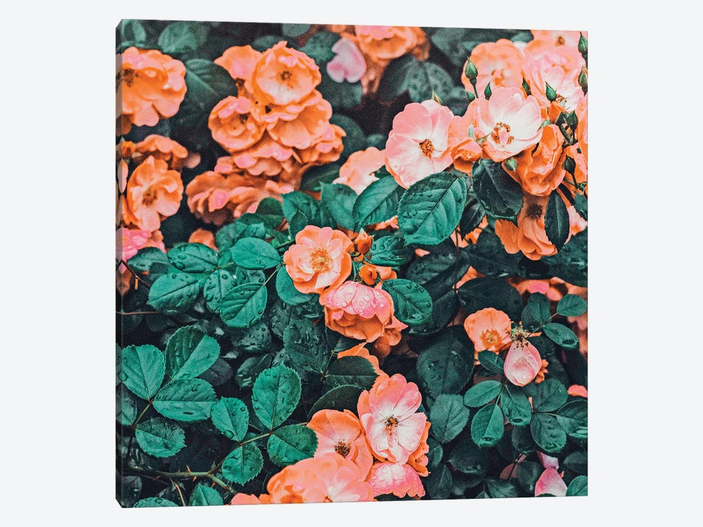 Vintage Blossom II by 83 Oranges 1-piece Canvas Wall Art