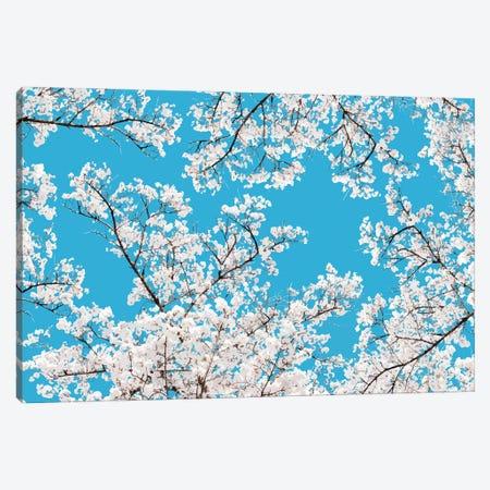 White Blossom Canvas Print #UMA624} by 83 Oranges Canvas Art
