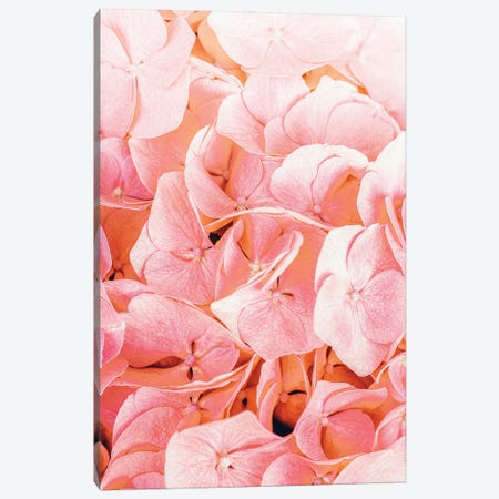 Blushing Canvas Print #UMA692} by 83 Oranges Canvas Wall Art