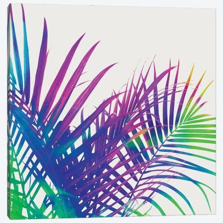 Colorful Palm Canvas Print #UMA791} by 83 Oranges Canvas Print