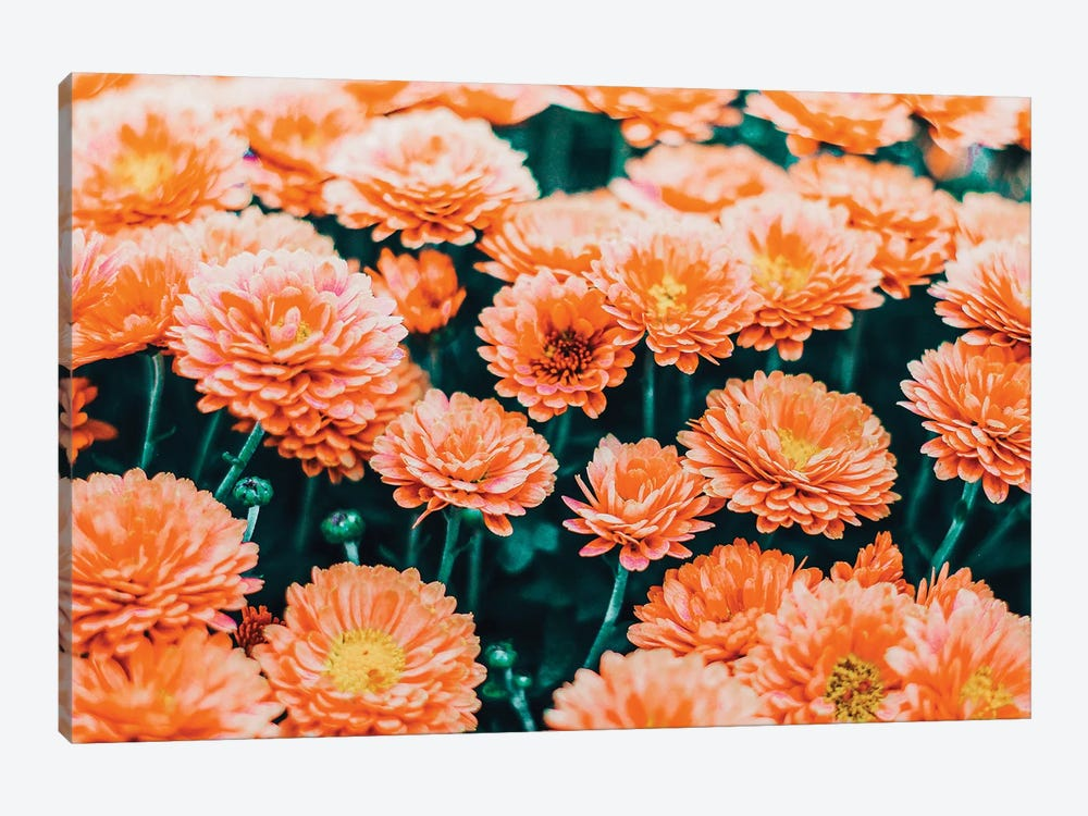 February by 83 Oranges 1-piece Canvas Art