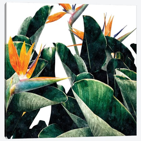 Paradise Bird Canvas Print #UMA804} by 83 Oranges Canvas Art