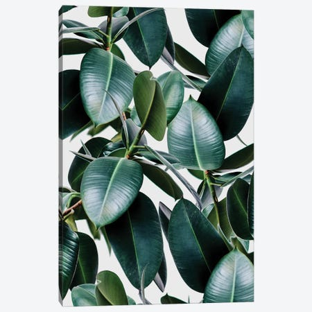 Tropical Elastica Canvas Print #UMA819} by 83 Oranges Canvas Artwork