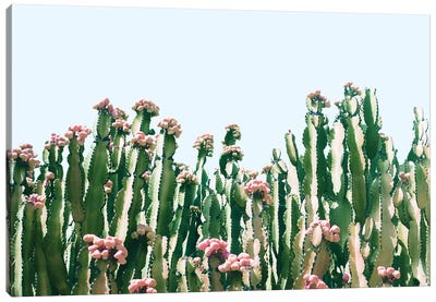 Cactus Blush Canvas Art Print