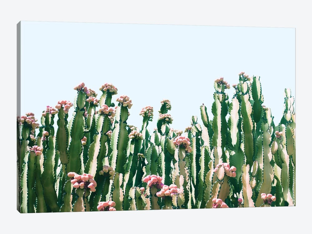 Cactus Blush by 83 Oranges 1-piece Canvas Art Print